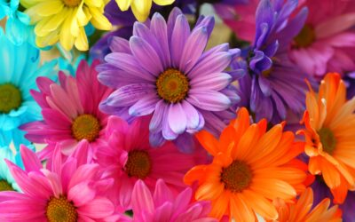 Preventing and Treating Spring Allergies